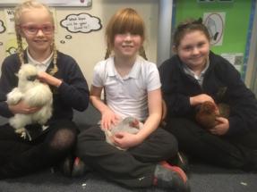 Tames hens at school