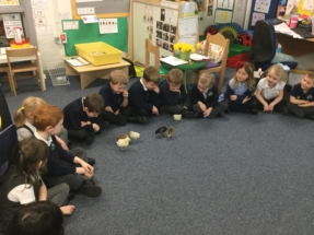 Chick playtime at Mosborough